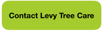 Contact Levy Tree Care
